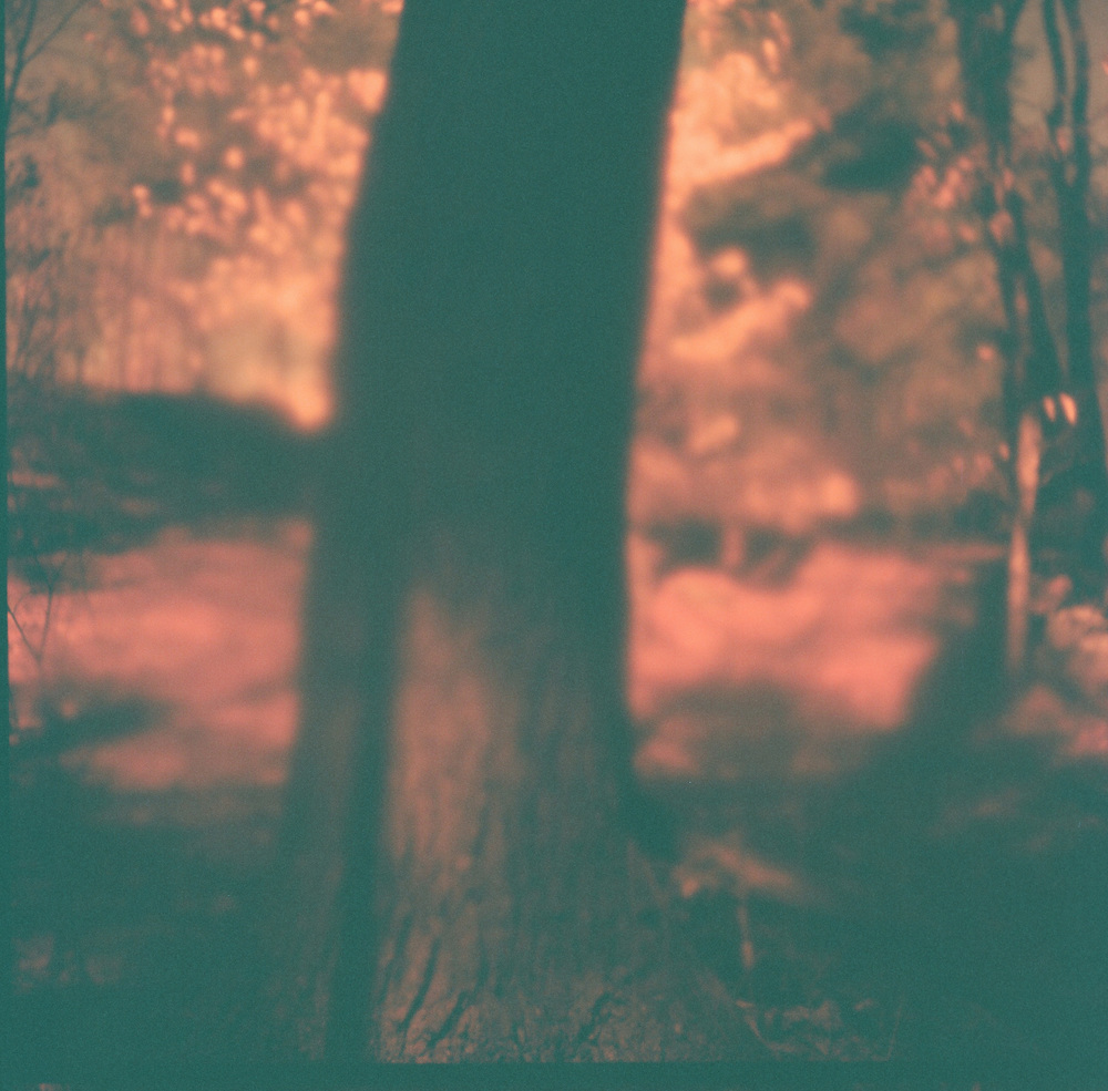 Accidental Redscale, Etna, NH, 2014