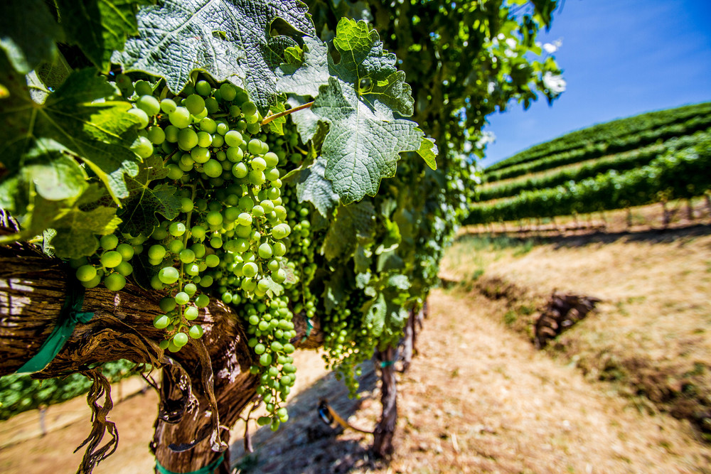 WineCountry_June2014_JKeefe-41.jpg