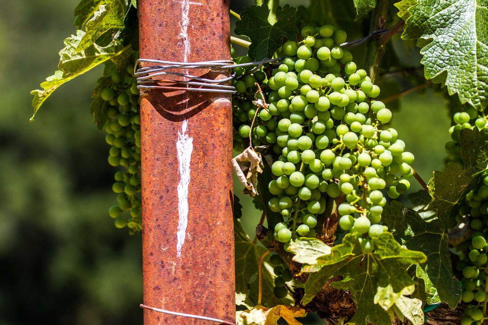 WineCountry_June2014_JKeefe-73.jpg