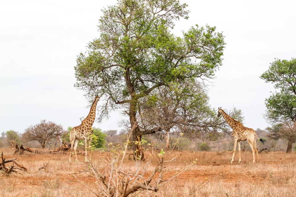 7D_SouthAfrica_2013_JKeefe-4371_1000px72dpi.jpg