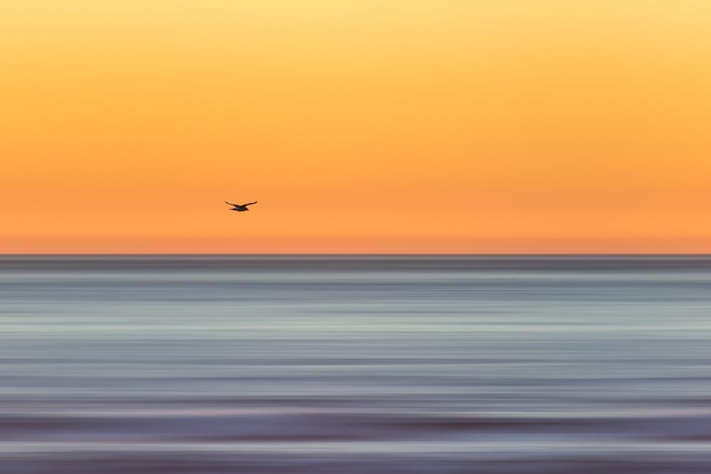 OBSF_Sunset_160207_JKeefe_7D-0140-PS_Blur_(GradSidelines)_1000px72dpi.jpg