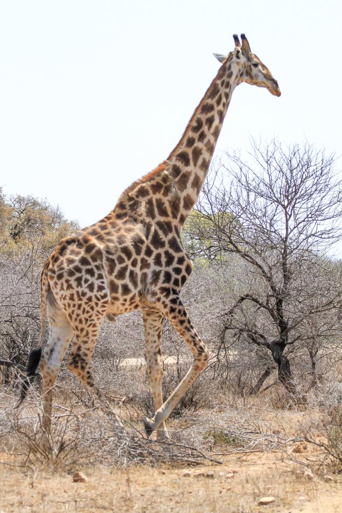 7D_SouthAfrica_2013_JKeefe-4406_1000px72dpi.jpg