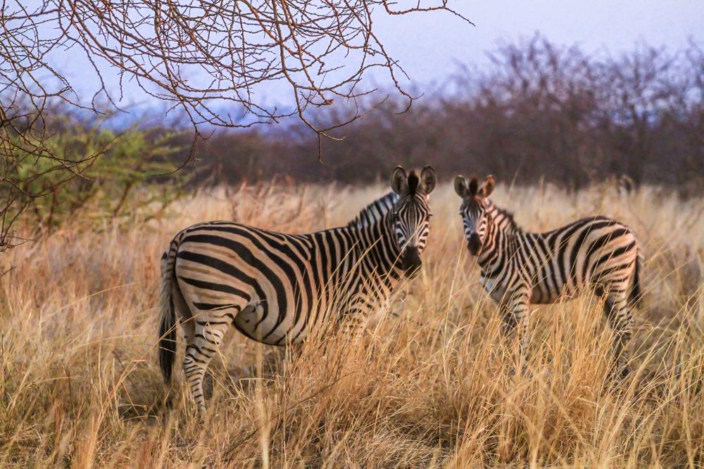 7D_SouthAfrica_2013_JKeefe-4719_1000px72dpi.jpg