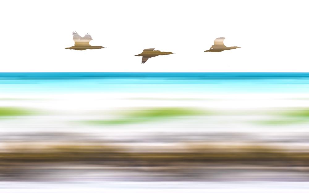 SouthAfrica__170105_JKeefe_7D-0358_BirdsBrown.jpg