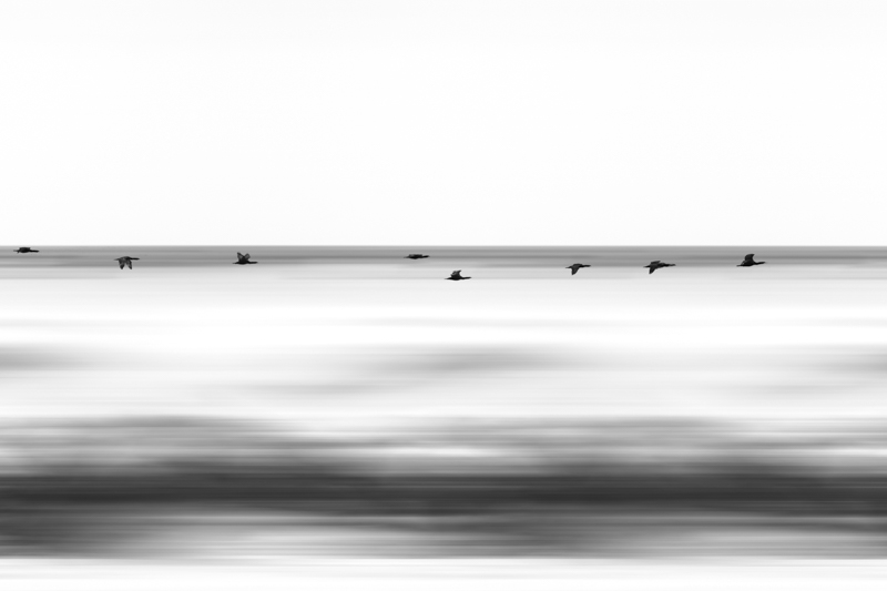 SouthAfrica__170105_JKeefe_7D-0358_motion1000_Birds.jpg