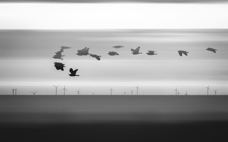 SouthAfrica__170111_JKeefe_7D-4026_birds02.jpg