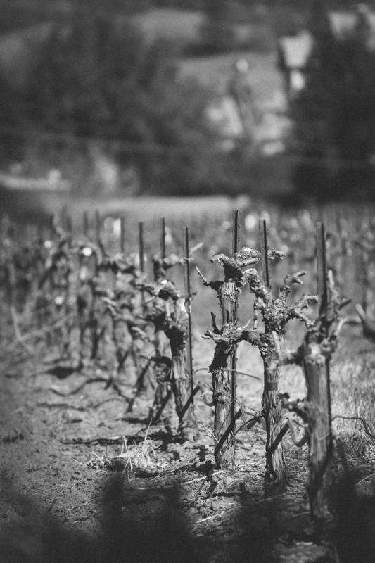 WineCountry_030215_Healdsburg_JKeefe_7D-3841.jpg
