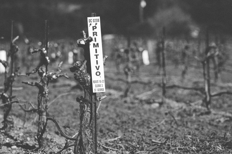WineCountry_030215_Healdsburg_JKeefe_7D-3864.jpg