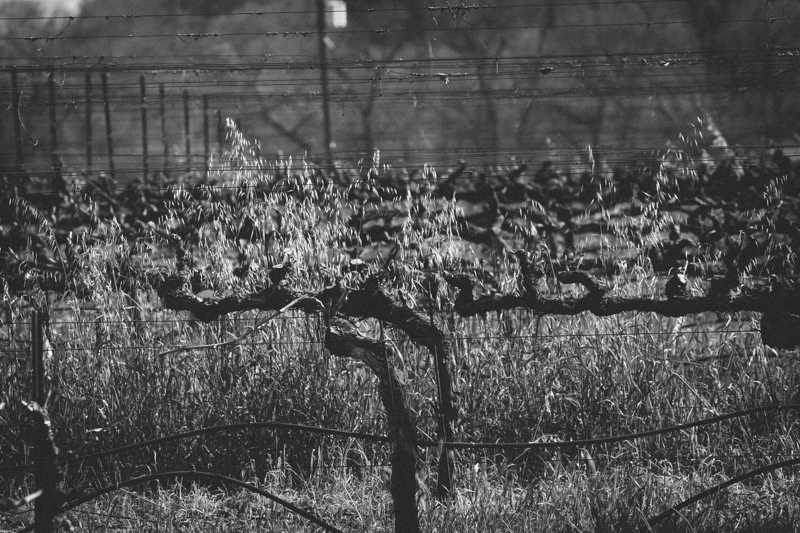 WineCountry_030215_Healdsburg_JKeefe_7D-3875.jpg