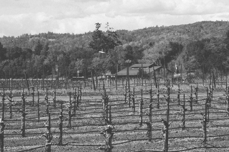 WineCountry_030215_Healdsburg_JKeefe_7D-3881.jpg