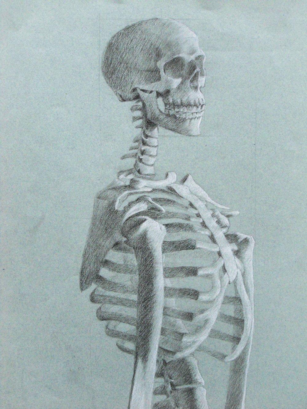 Skeleton Study - Kipp T. Jarden