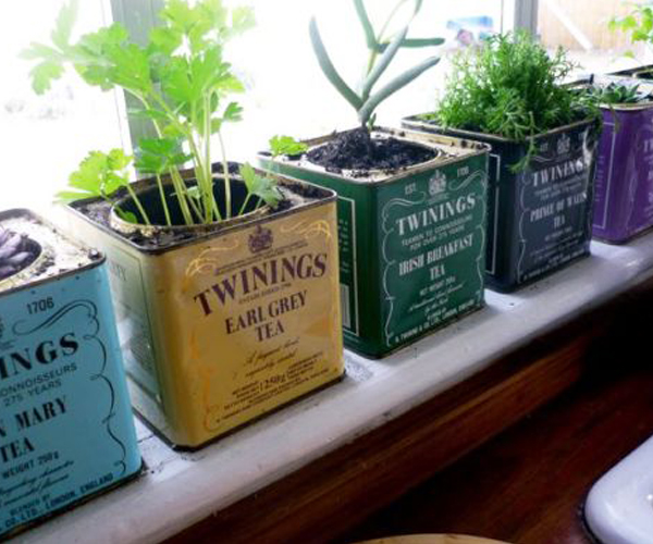Tea Tin Pots