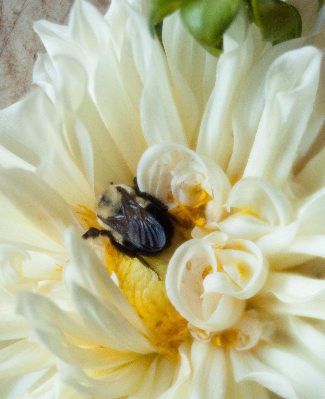 Green Door Flowers(WEB)-33.jpg