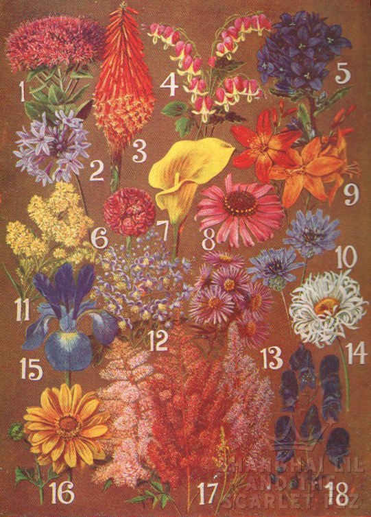 from Handbook of Bulbs and Perennials - R.E.Harrison