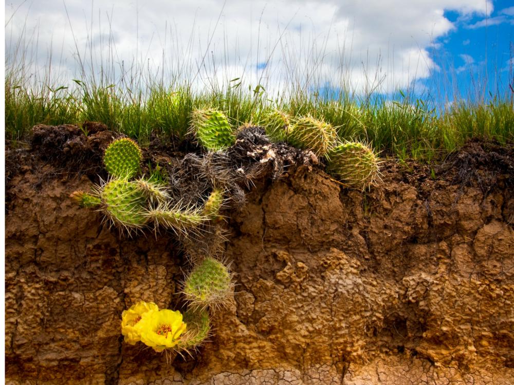 Desert flower.png