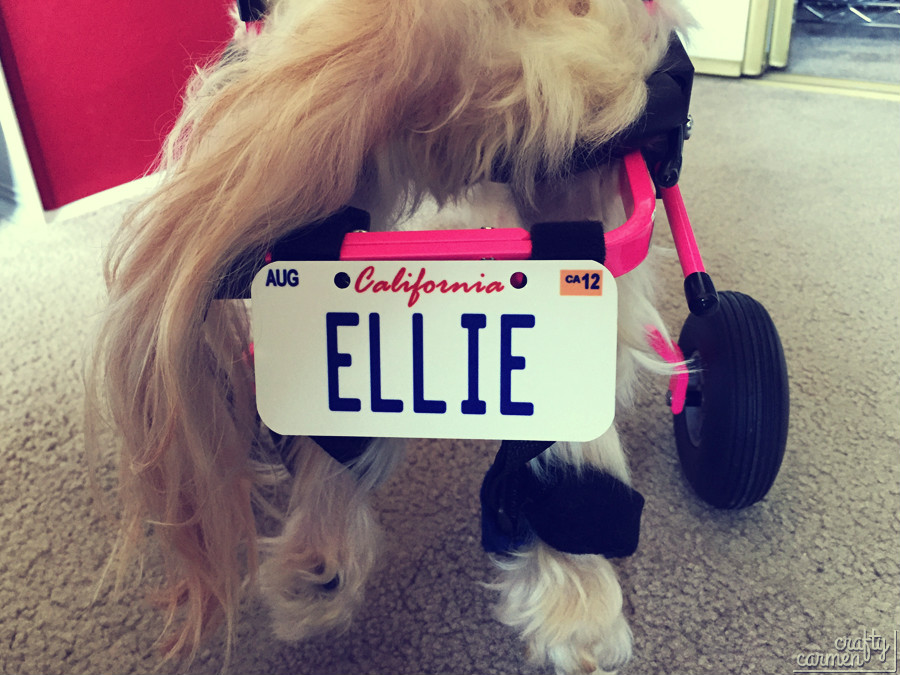 Ellie the Wonder Dog | craftycarmen