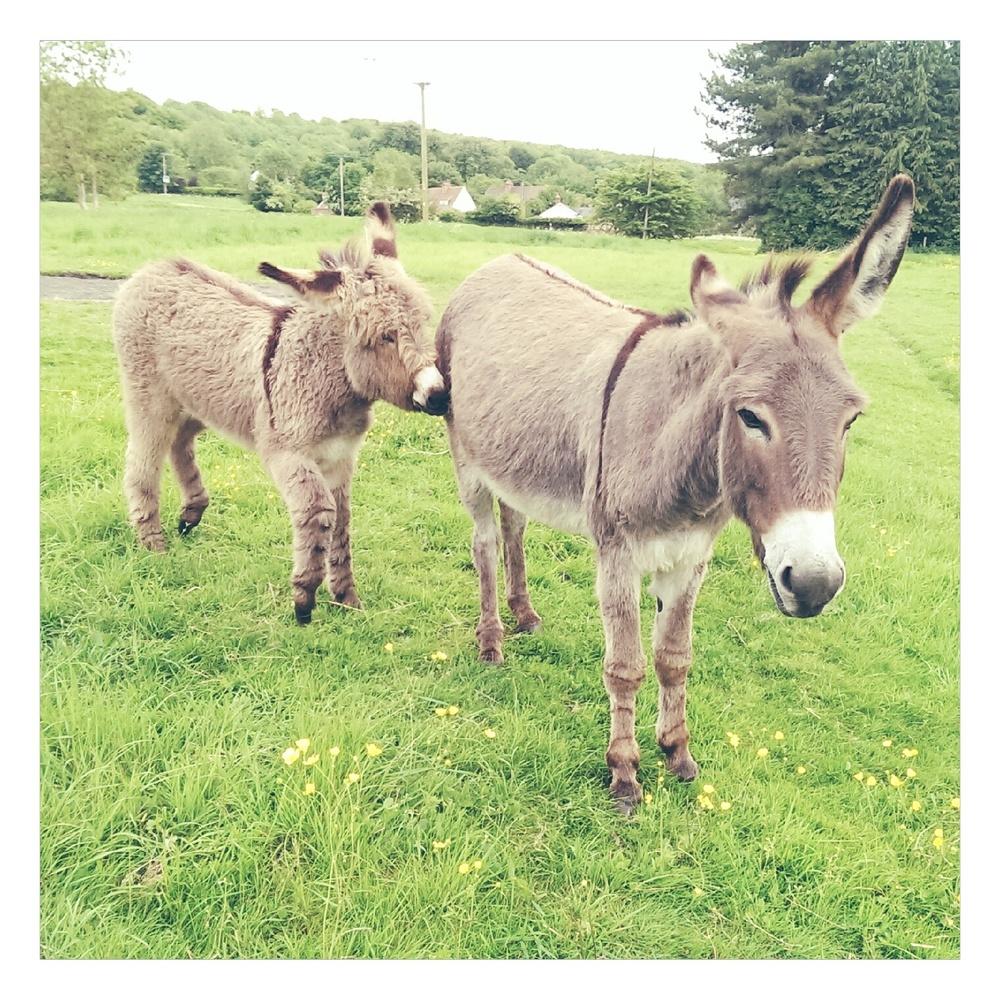 donkeys - rubelle