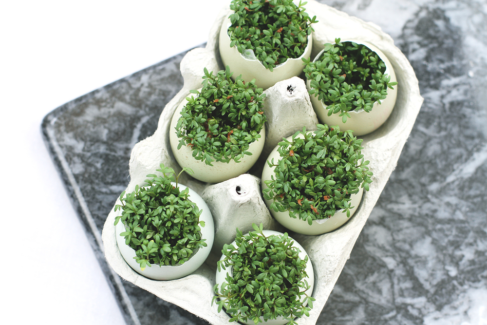 Rubelle || How to grow cress in egg shells