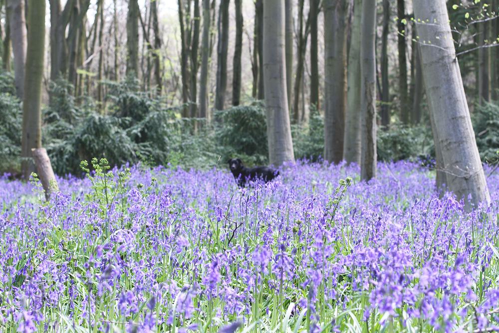 Rubelle || Teddy Bear Picnic Bluebell Woods