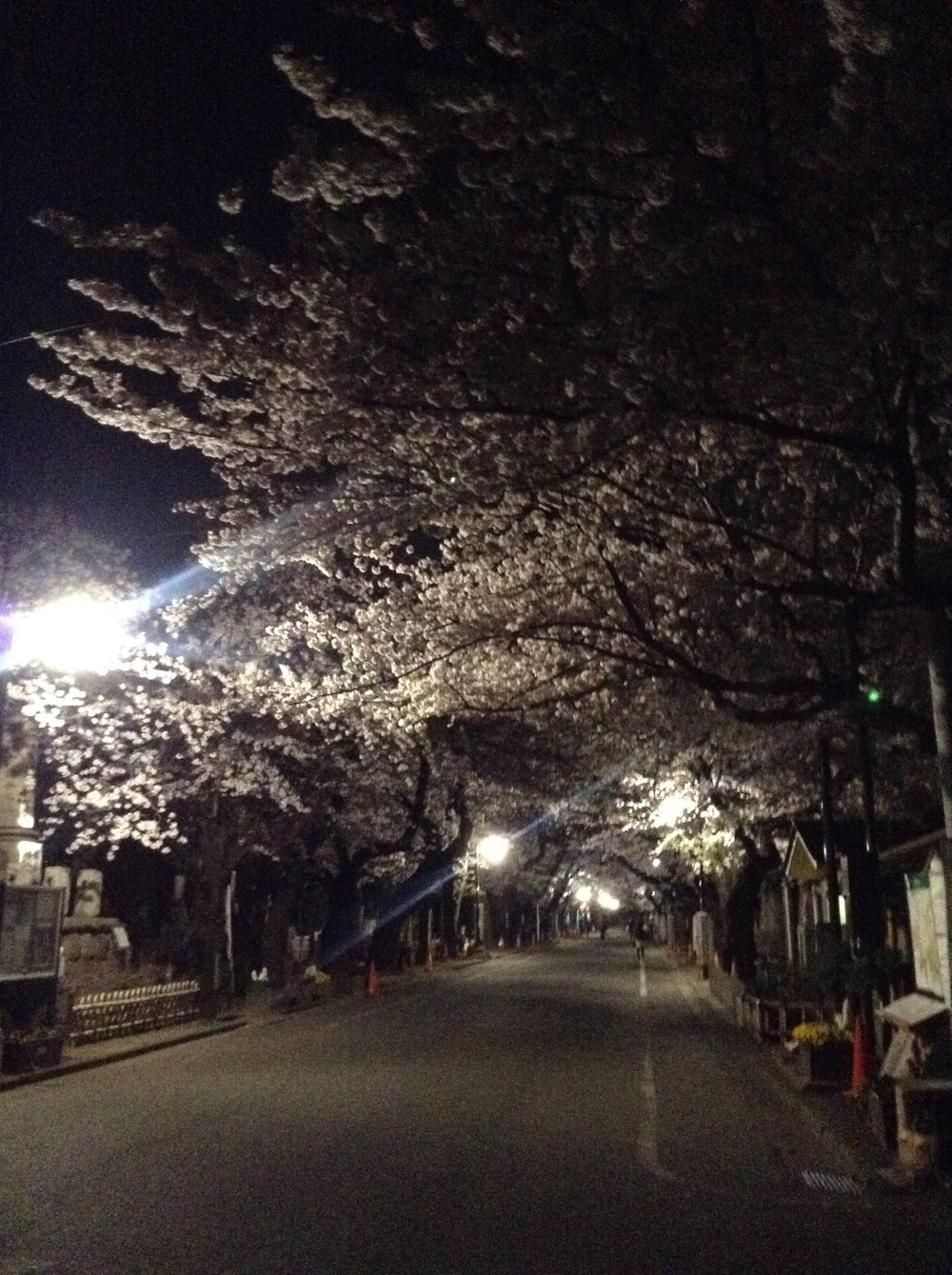Empty alley in Yanaka cemetery at night