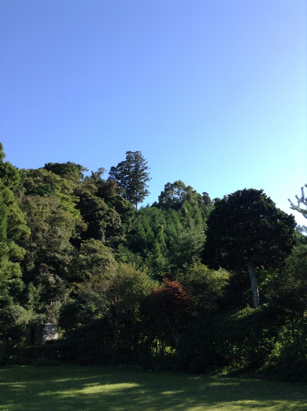 Our garden in Ohara in early autumn