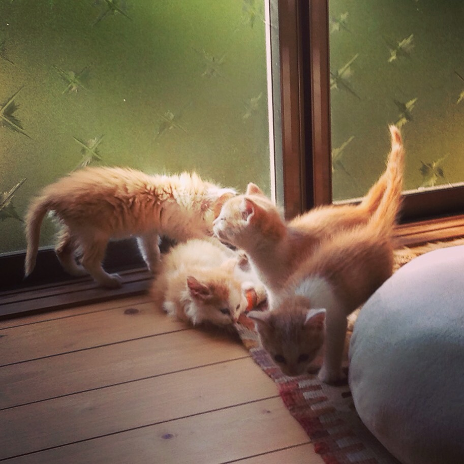 Our 4 kittens just before the split