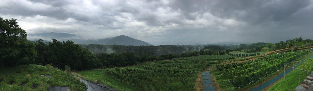 panoramic view of the Suntory winery