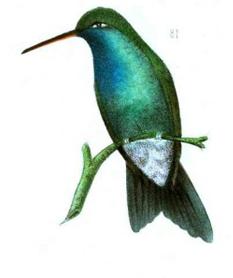 hummingbird-2.png