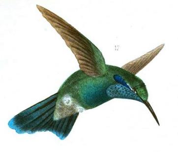hummingbird-3.png