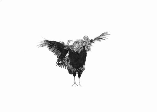 LargeOneRooster300.jpg