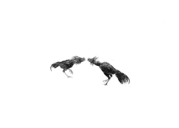 RoosterFight-1.jpg