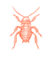 cockroach01.png