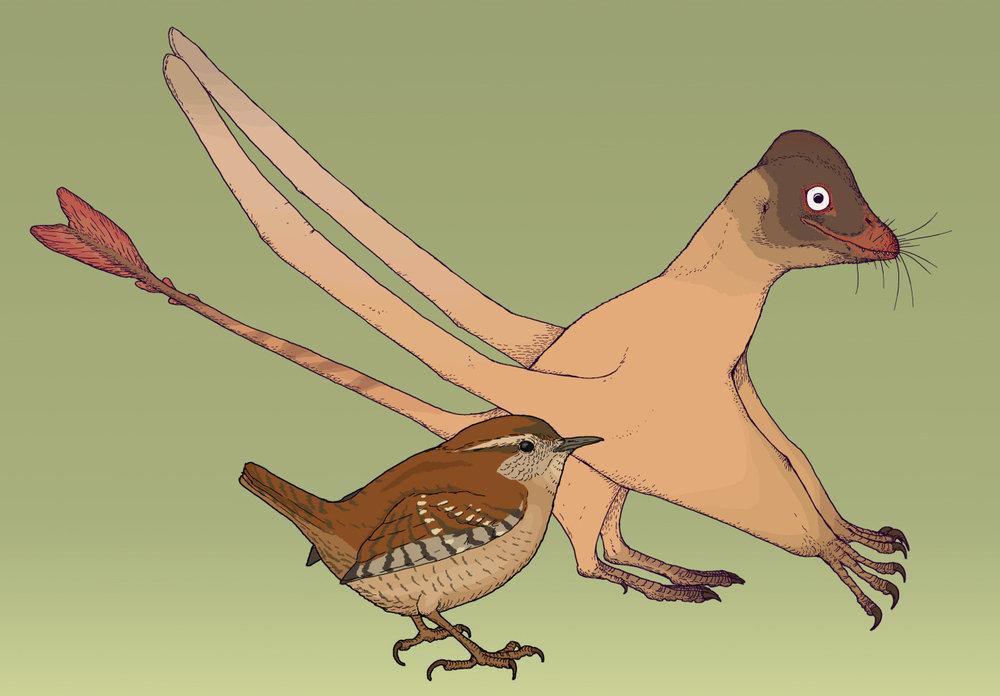 Qinlongopterus