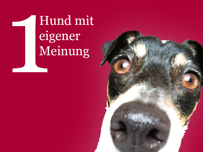 1_Hund_Meinung.png