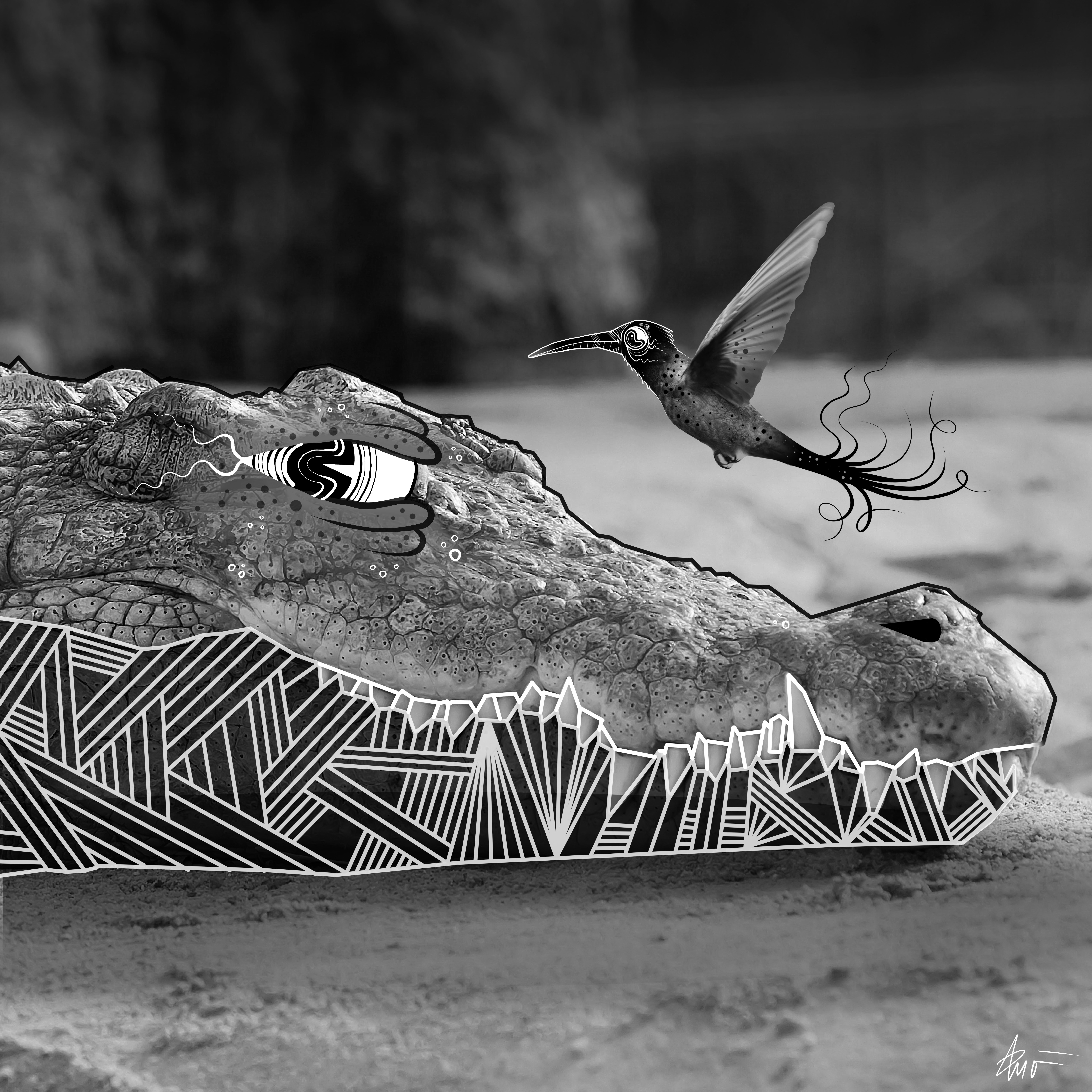 gator 3.jpg
