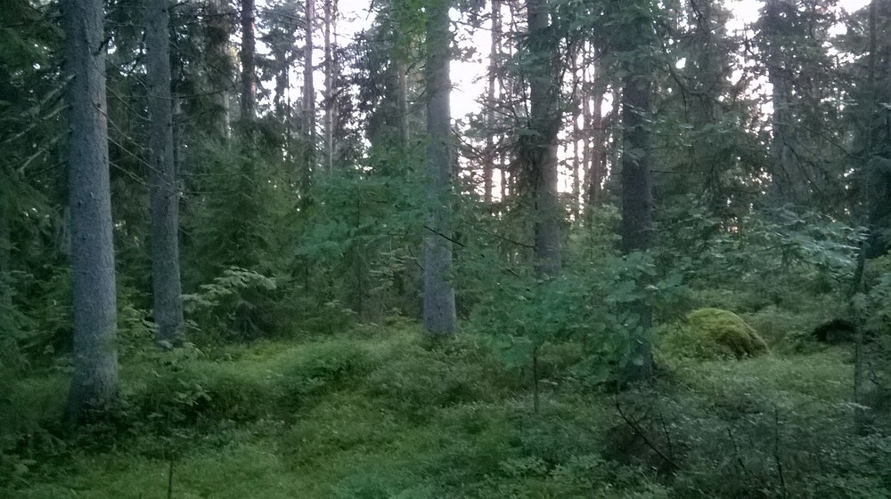 Forest near Saaren Kartano, Finland