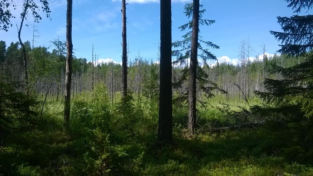 Hiljaisuuden vallitessa tekemämme luontoretki noin tunnin matkan päässä olevaan luonnonpuistoon. En muista nimeä juuri tähän hätään, pahoittelut.