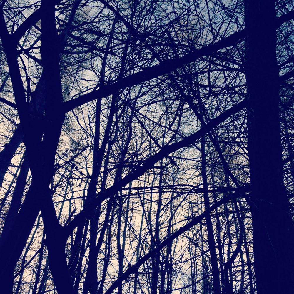 treegazing (i)
