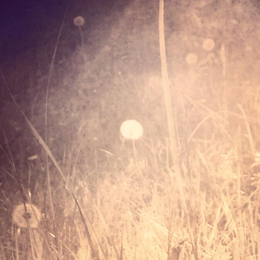 grassgrazing (i)