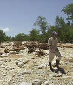 over 98% of Haiti is deforested