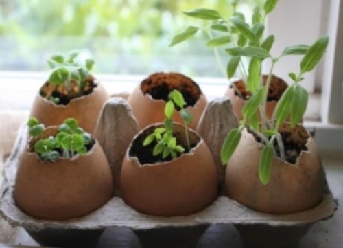 egg-shell-for-plants.jpg