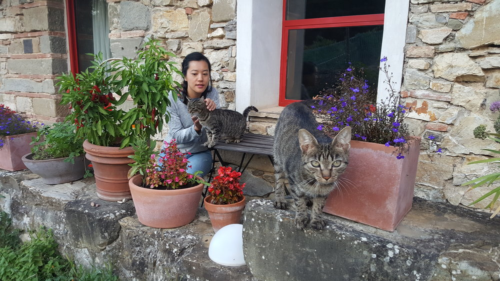 Hanging with the cats on our country patio.