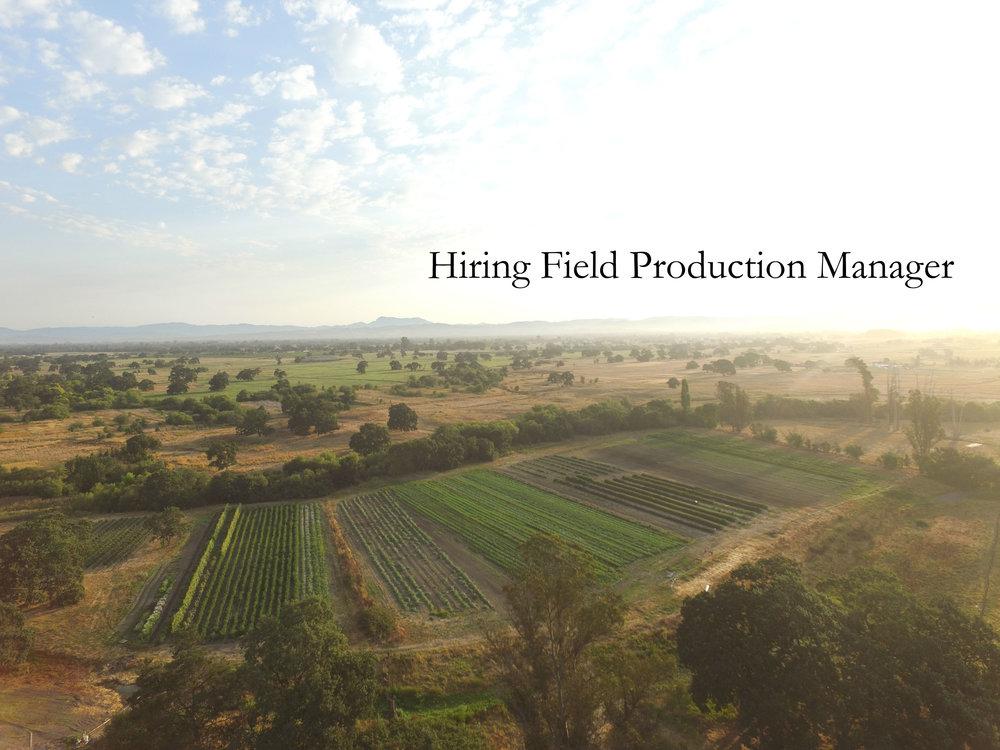 hiring drone shot.jpg