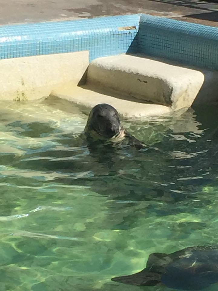 We stopped by the seal sanctuary in Gweek where they rescue and rehabilitate injured seals. This seal was one of my favourites. He sadly can't be released due to a brain injury but he's making the most of life.
