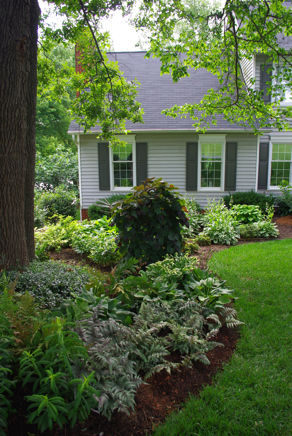 Shade Plantings- Kernersville, NC