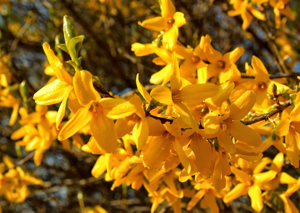 Picture courtesy of Trine Harristz Larsen RGBstock.com