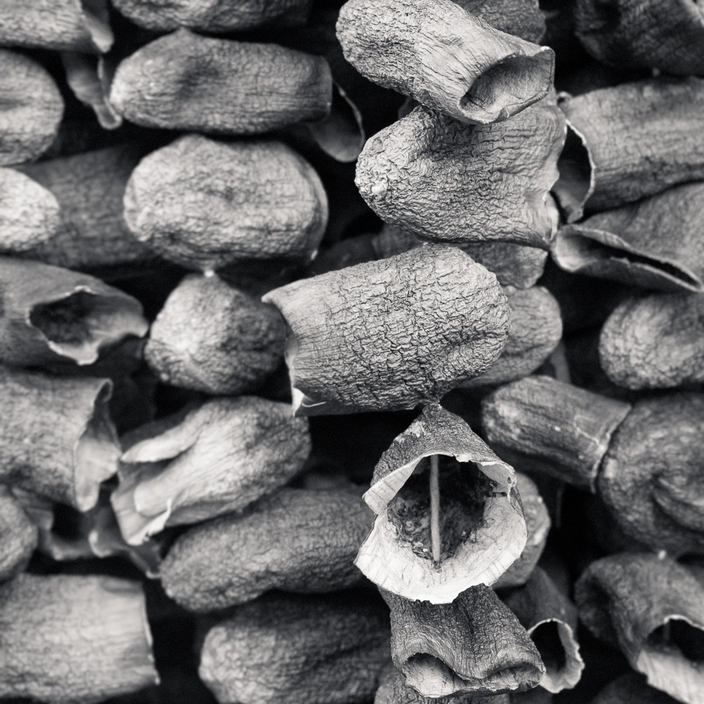 Dried eggplants, Antep, Turkey