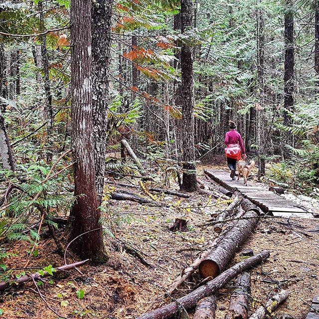 Gotta love these fall trail running days.  #trailrunning #runningwithdogs #ferniestoke