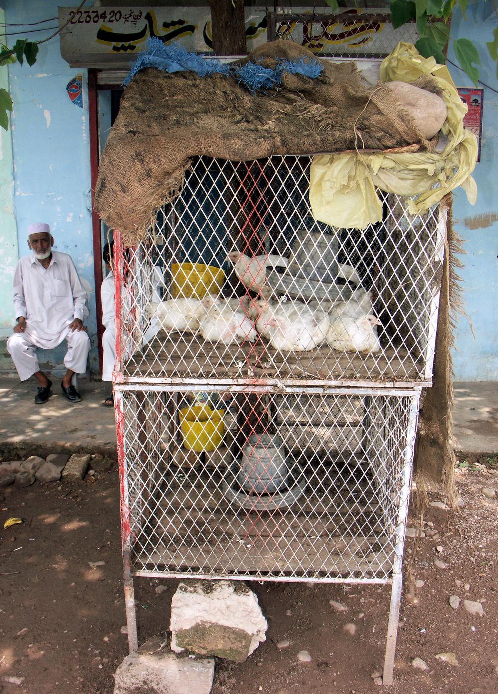 035 PB Poultry shop.jpg