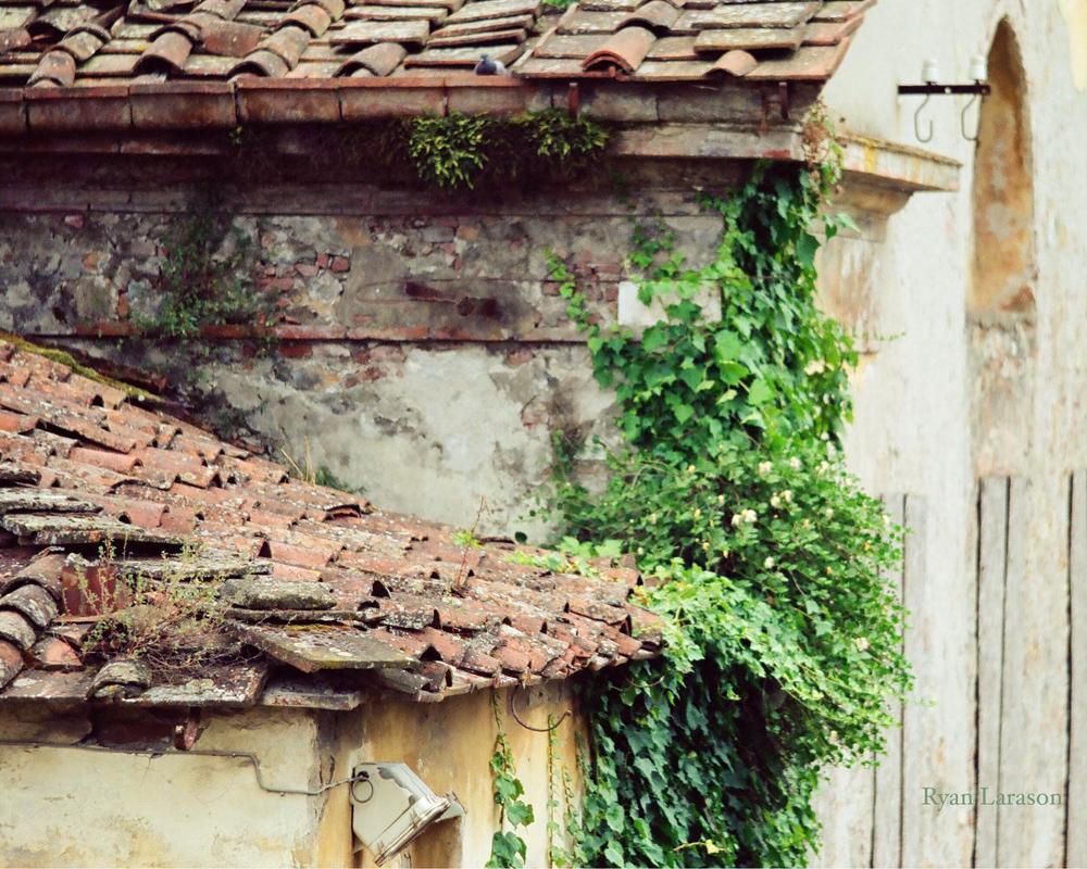 Roof_8x10_WM.jpg